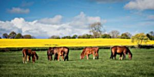 Numerous foals with mares in paddocks