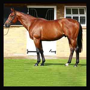Intrinsic TB Stallion