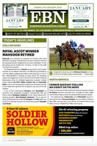 Mahsoob TB Stallion retires to Hedgeholme Stud.