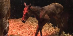 First Intrinsic Foal of 2020