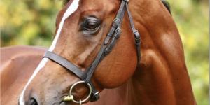 TB Stallion Intrinsic