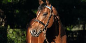 TB Stallion_Group One Winner